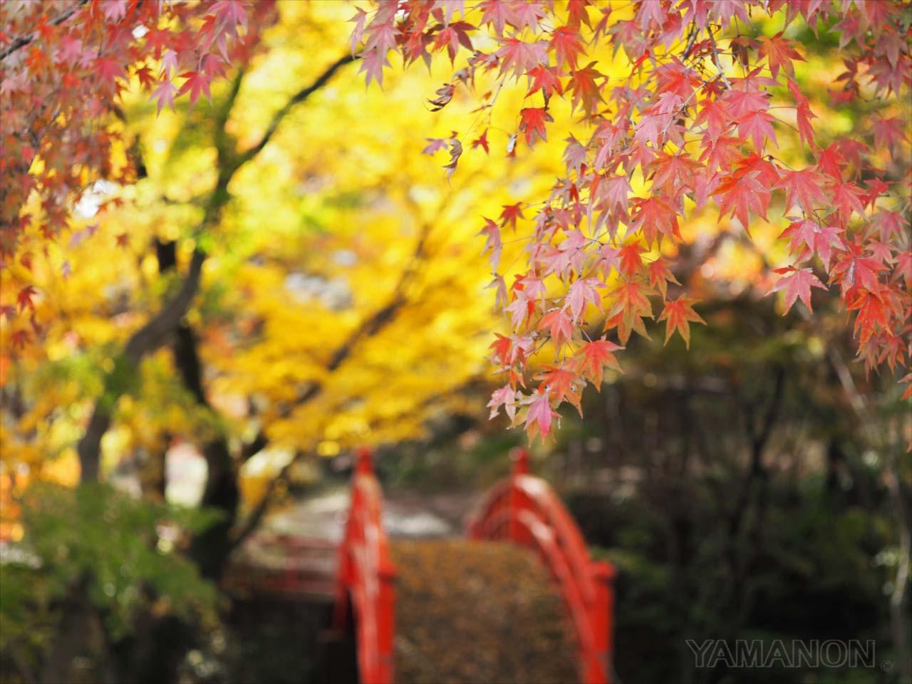 矢祭町の紅葉(2016/11/15)