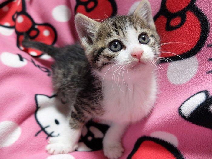 知り合いが仔猫保護したというので見せてもらってきました。控えめに言って天使。 pic.twitter.com/Ta9s4LotuT