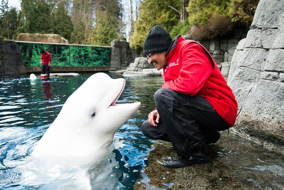 It is with a heavy heart that we share the loss of our beloved beluga whale Qila. https://t.co/pZ9bFJRUg7 https://t.co/qEsofePBIu