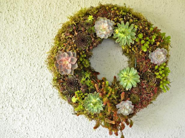 Do you know how to care for wall succulents? DIY