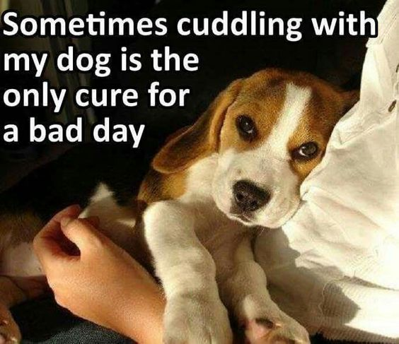Funny dog quotes for kids - photo#7