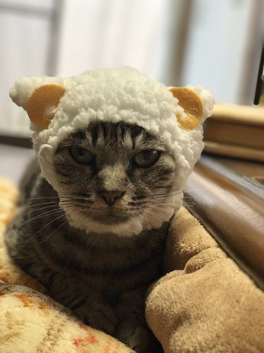 @rosia29 あっ、ハッピーバースディ先生。実家の猫ちゃんあげるので元気出してください。 https://t.co/gdUtvaRirn