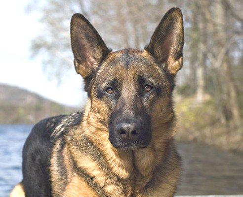 Giochi per cani: Auchan ritira CORDA JUTA perchè poco sicuro