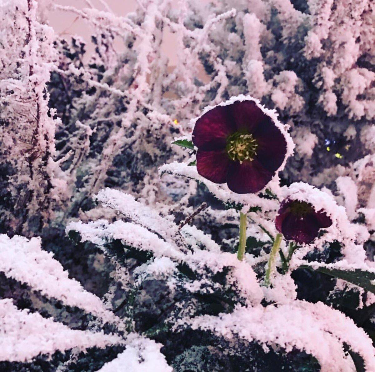 For it was #TheNightBeforeChristmas... @Carlyandflowers #EastBar #sketchlondon #outsideinside #letitsnow https://t.co/YBqdbqbFXs