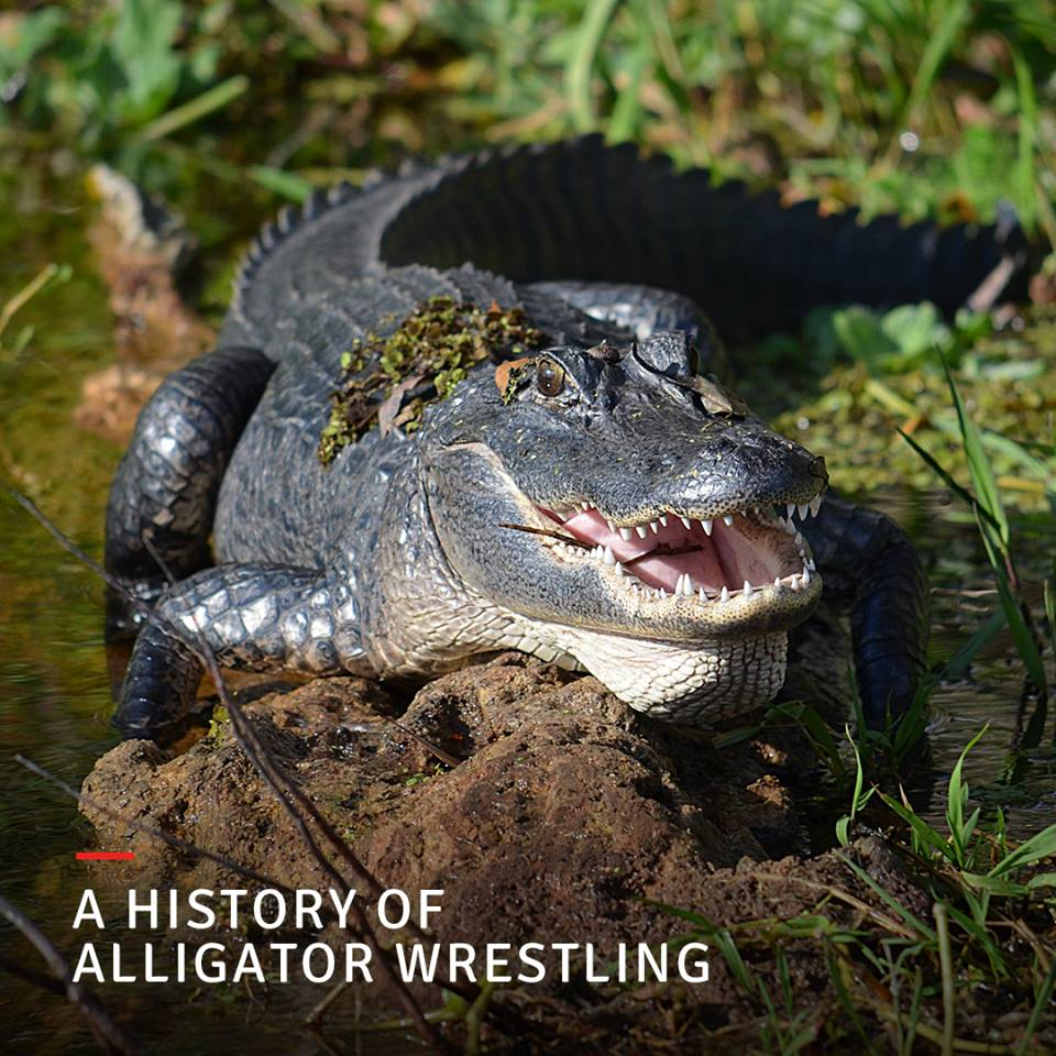 stranahan house history of alligator wrestling