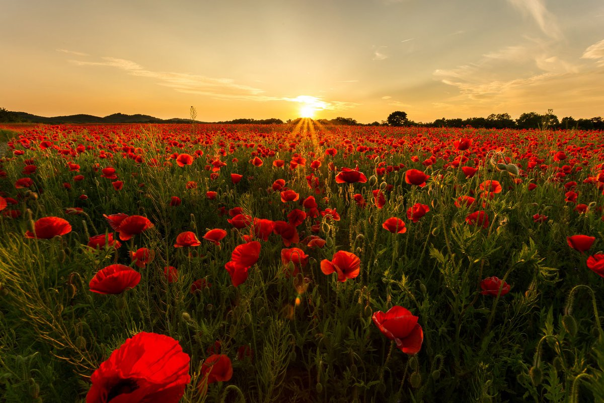 HD Wallpapers On Twitter Landscape Photo By Olli Henze Tco MhtUZCWVno Flowers Garden Spring Sunrise Nature Lanscape Wallpaper
