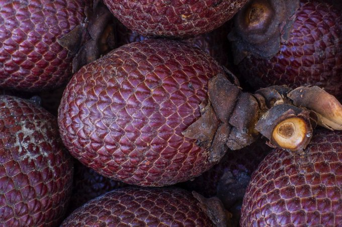 Buriti: strange-looking fruit, or beauty powerhouse?