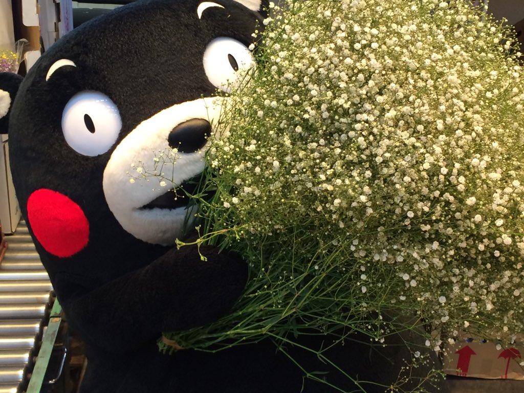 11月22日の良い夫婦の日は、くまもとのお花でいつもサンくまーの気持ちを大切な人に伝えてほしかモン☆