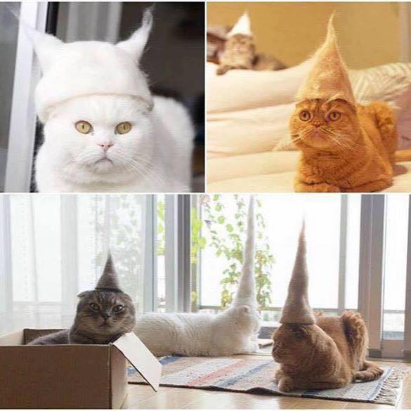 It's Friday. We're all tired. So here's some photos of cats wearing hats made from their own hair. Enjoy. https://t.co/iKUIzto9k0