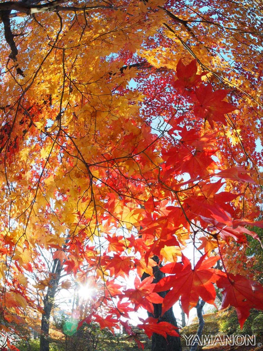 福島県南の紅葉も終盤。