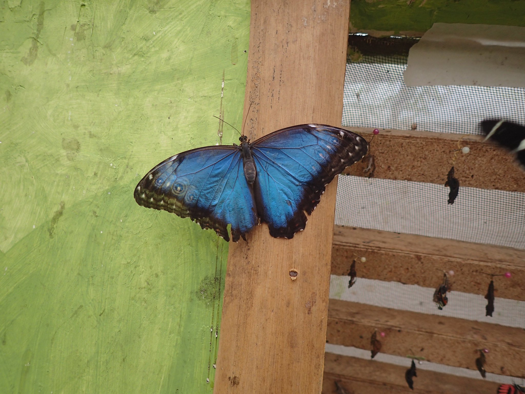Not as iridescent as the hummingbird, but still. BLUE. https://t.co/uSI3383XWP
