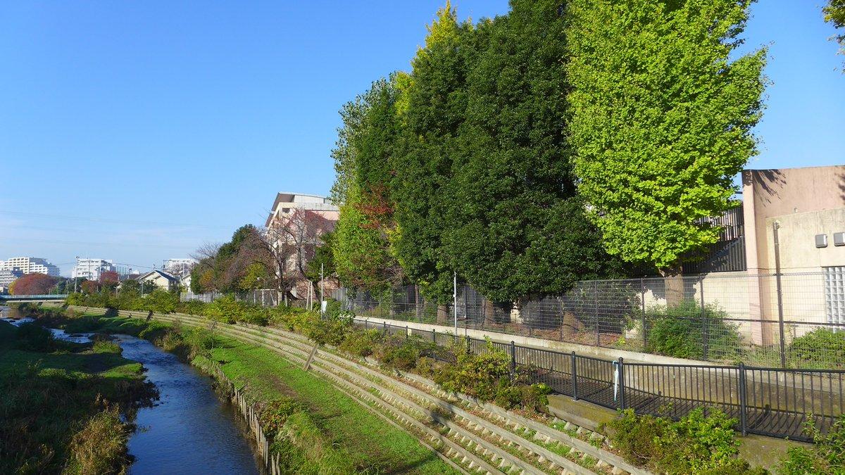 おはようございます。きょうの調布市は良いお天気になりました。きれいな青空です。たまには野川沿いを散歩してみてくださいきれいな紅葉に遭遇するかも。 https://t.co/utjQpfB6NG