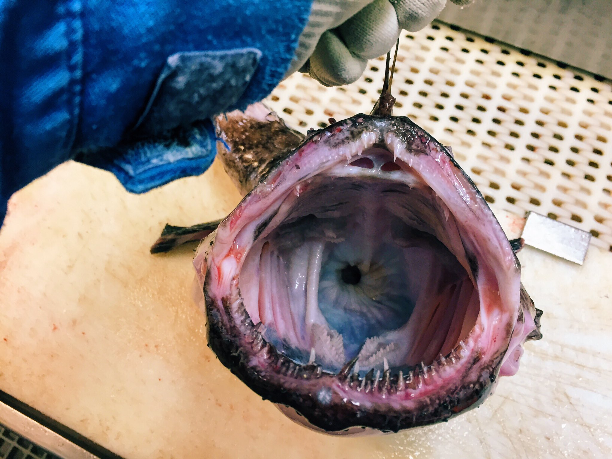 Картинки по запросу Рыба