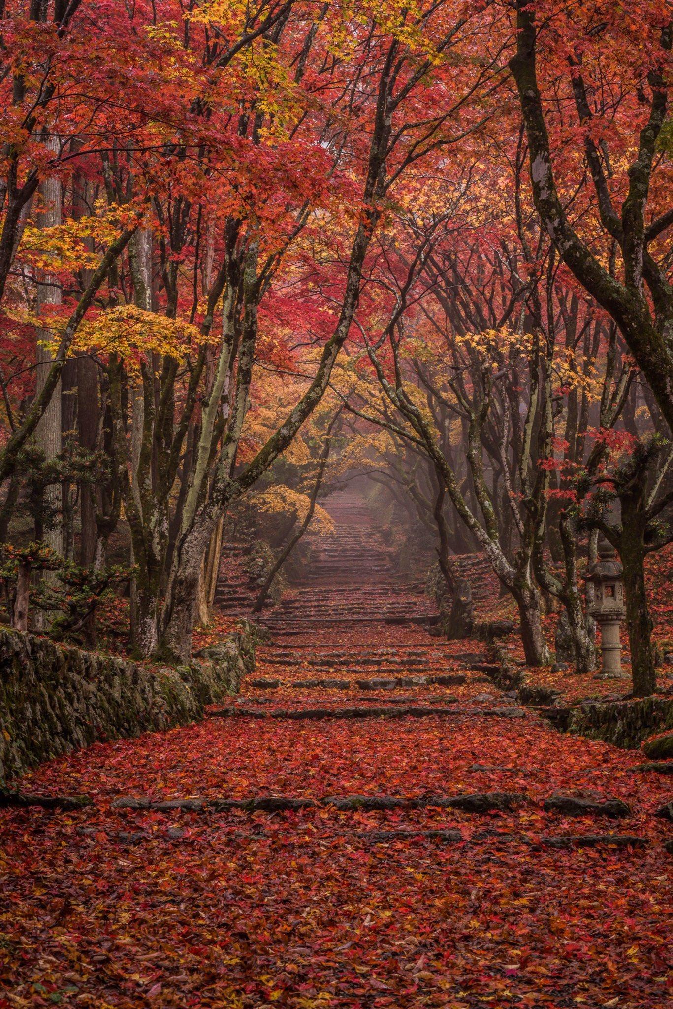 滋賀県「鶏足寺」の紅葉が美しすぎる…一度は行ってみたい!!