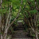 滋賀県「鶏足寺」の紅葉が美しすぎる…一度は行ってみたい!