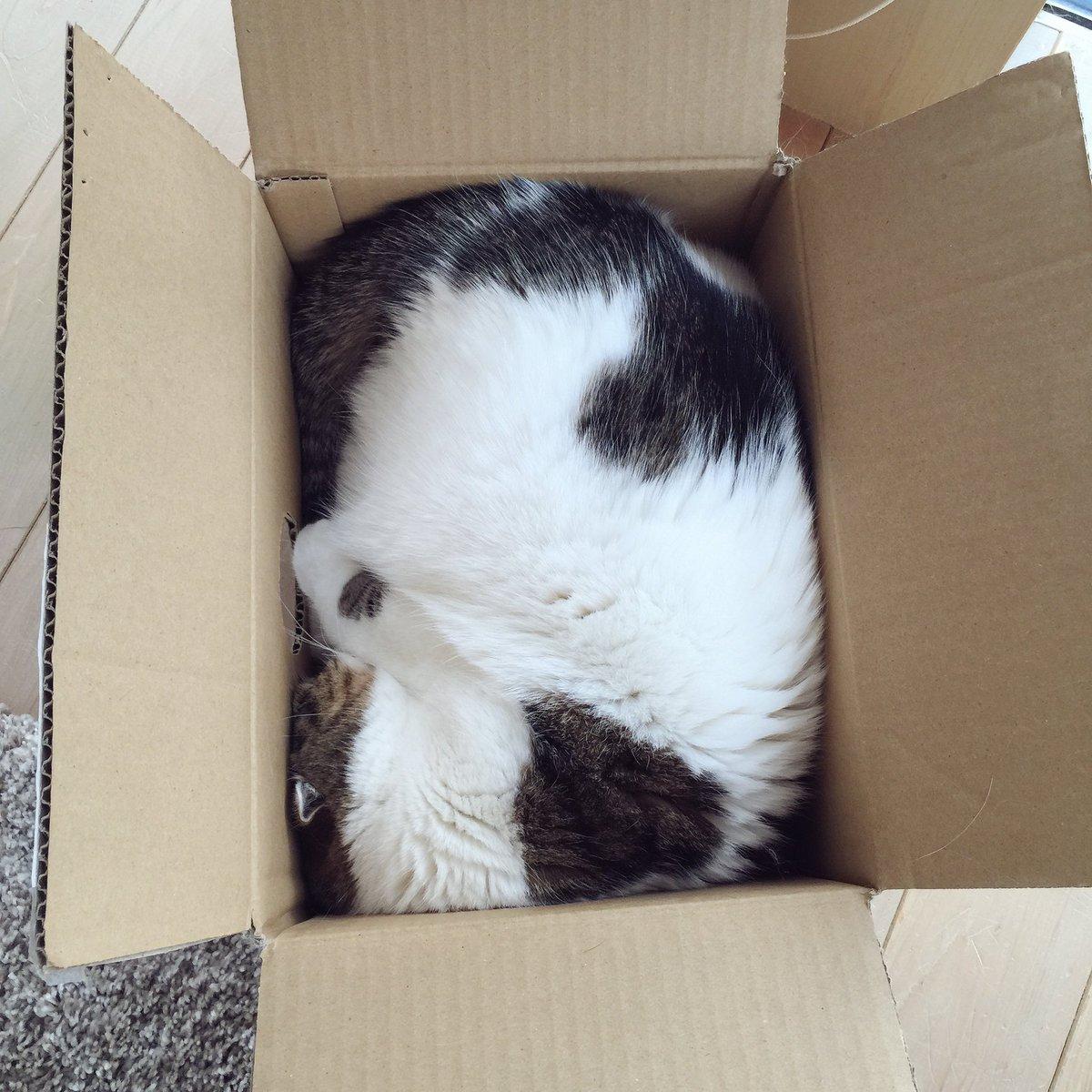 箱の中でモゾモゾする度に、横に空けた穴からいろんなものが飛び出す(笑) pic.twitter.com/RF8HgjjYwF