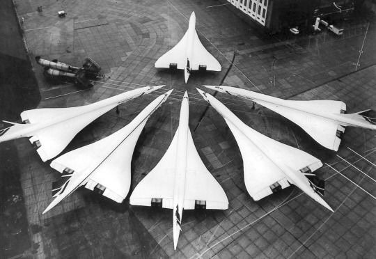 The last ever female Concorde, chased by the remaining males, shortly before they became extinct. https://t.co/PEz9ruonMO