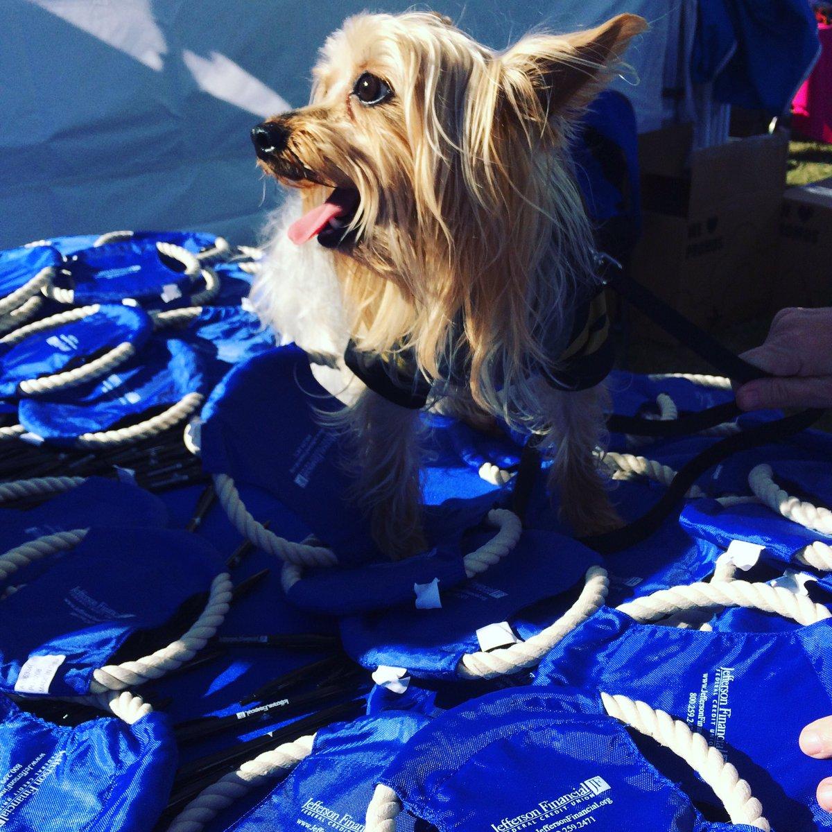 Our #Yorkie mascot Jaxon is giving away frisbees @JeffersonSPCA #PetFest #Lafreniere <br>http://pic.twitter.com/k9DCHvesGJ