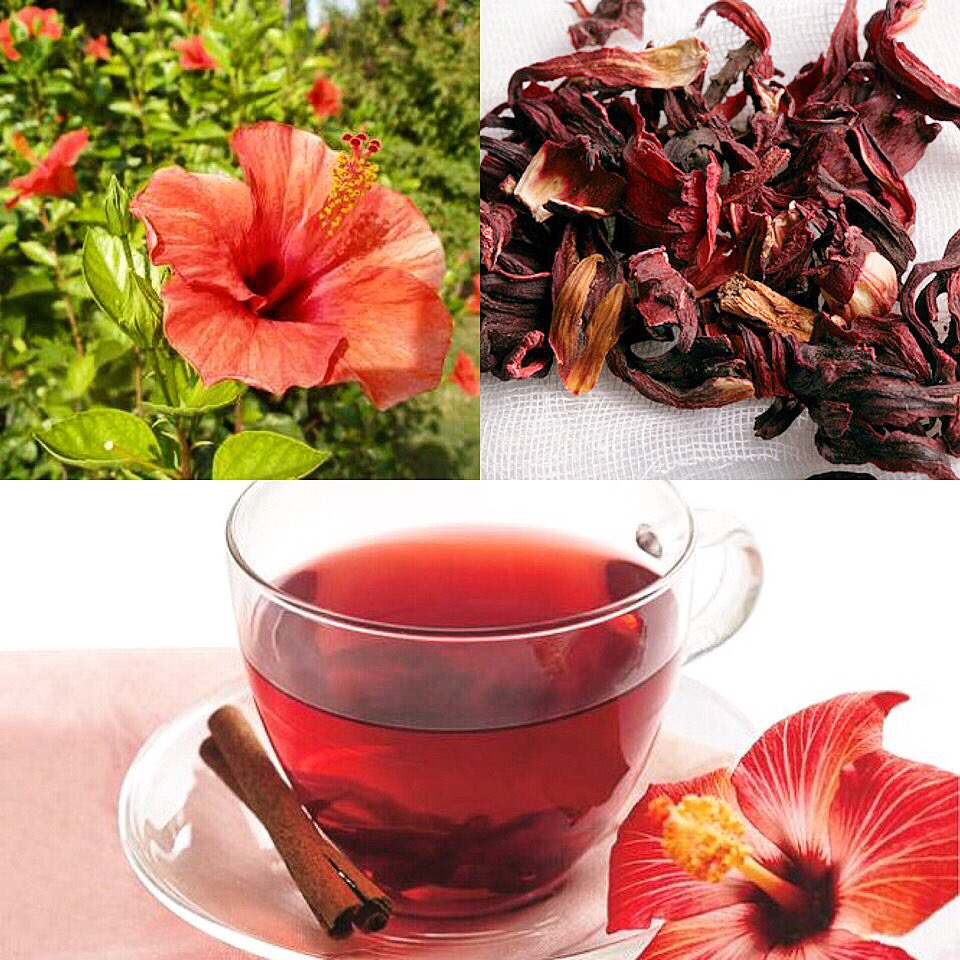 Hibiskus Çayı Faydaları ve Tarifi