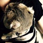 猫ちゃん、飼い主の服に入って暖を取る