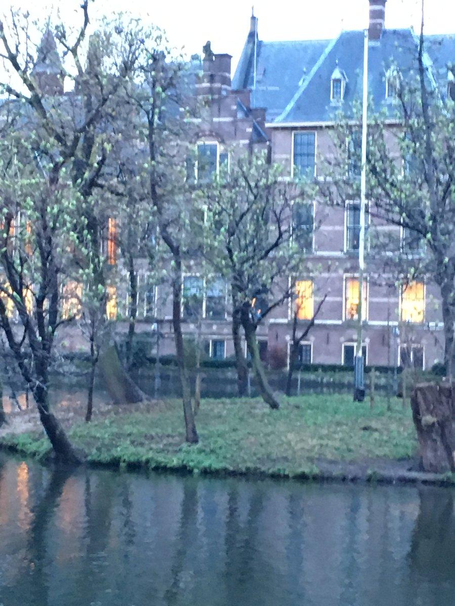 Dacht even dat de bomen in de Hofvijver alweer in blad stonden, maar het bleken zo'n 1000 halsbandparkieten. https://t.co/N7h8id8E6e