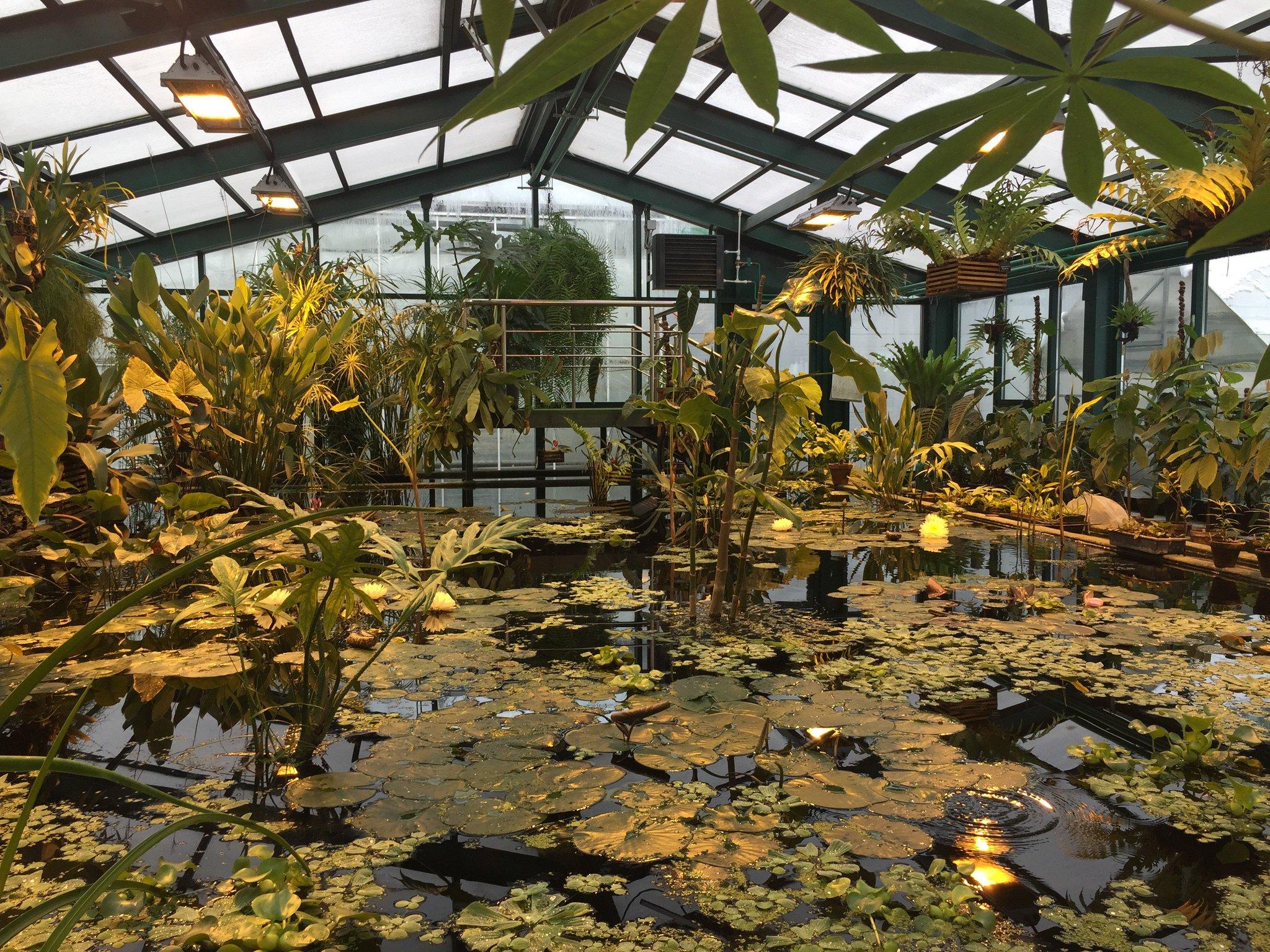 картинки аптекарский огород москва-оранжереи-как растут бананы