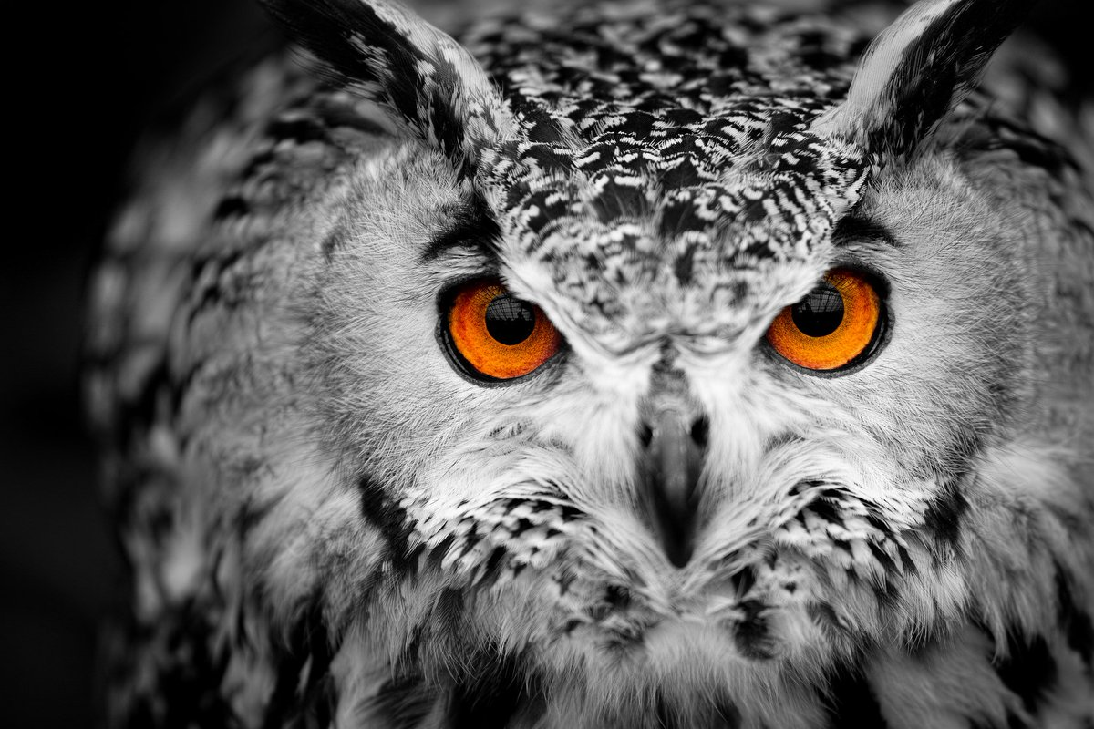 фото филин сова