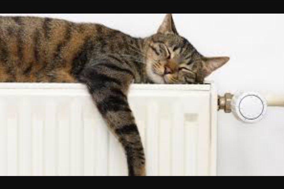1. Engageant pour le public/les élèves. Impossible de dormir près du radiateur en speed meeting comme en conf. Accès direct aux chercheurs. https://t.co/1mxoRq418M