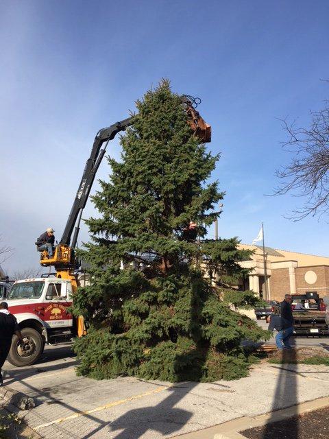 parks tree service