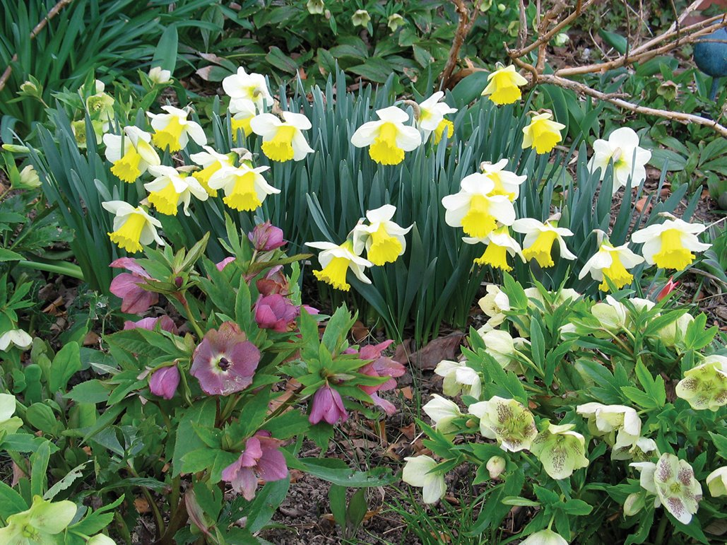 Today on  #plantchat we are talking SPRING BULBS with expert Becky Heath of @brentandbeckys -- how to add them to your garden design. https://t.co/tC1yd2SZO7