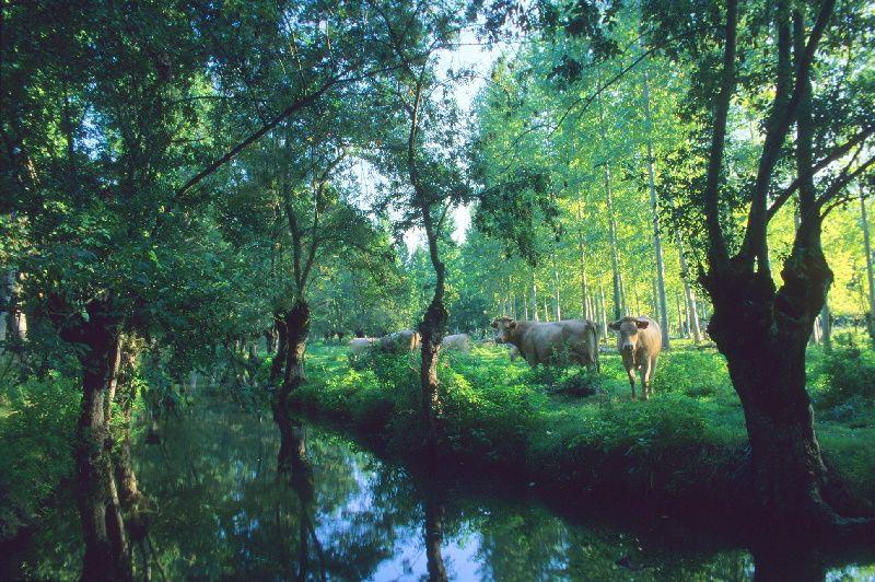 Paix, Sérénité et Biodiversité #maraispoitevin #deuxsevres #NouvelleAquitaine #environnement #PaysagesEtPerspectives<br>http://pic.twitter.com/ae2ZmIWbmm