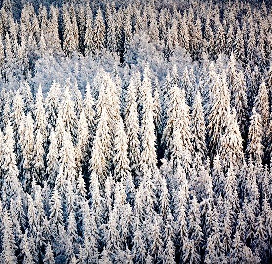 Metsä Tissue (@MetsaTissue) | Twitter