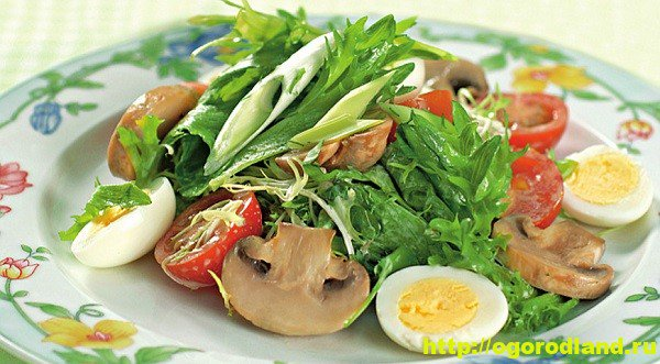 Рецепты салатов из папоротника
