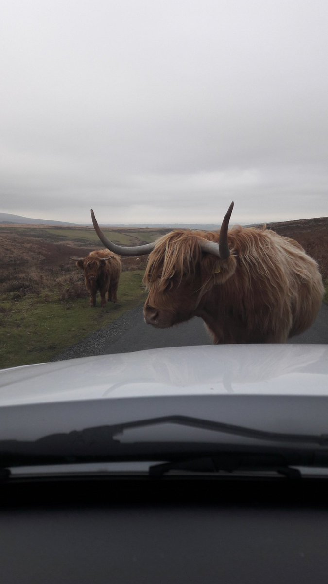 We were happy to wait until he moved on! #Dartmoor https://t.co/JxjFz0UQaW