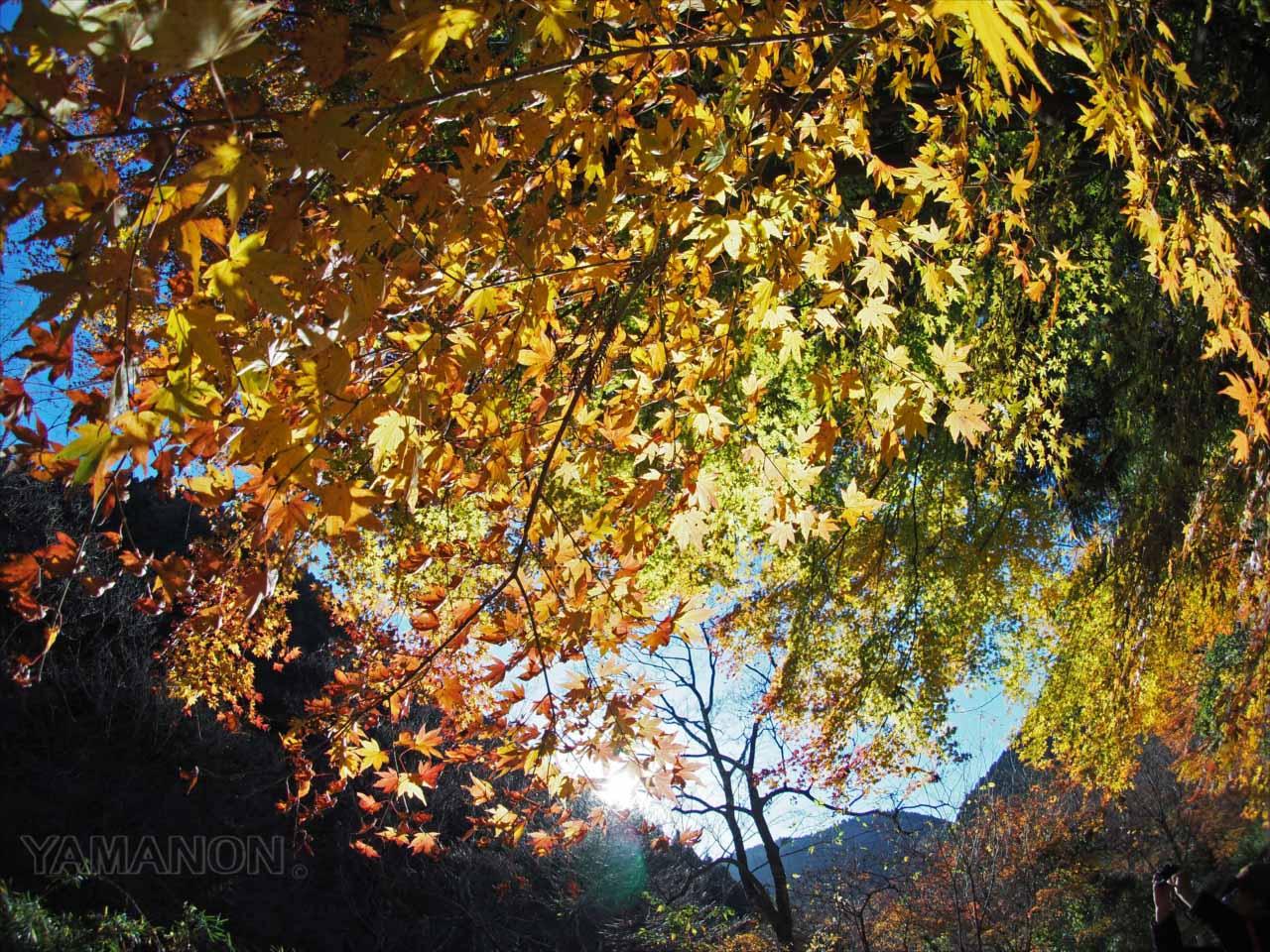 鮫川・龍神峡(いわき)の紅葉