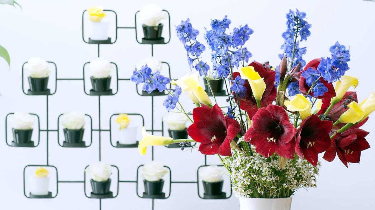 Flash -  L'office Hollandais des Fleurs présente l'Amaryllis https://t.co/X3W5tD2qRn
