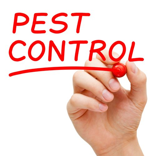 Do-It-Yourself Pest Control