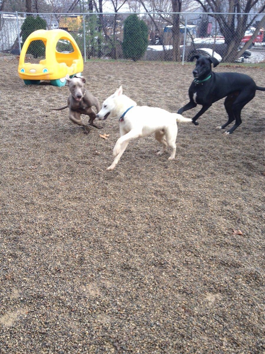 Stitch and Zeus try to catch up to Leif!
