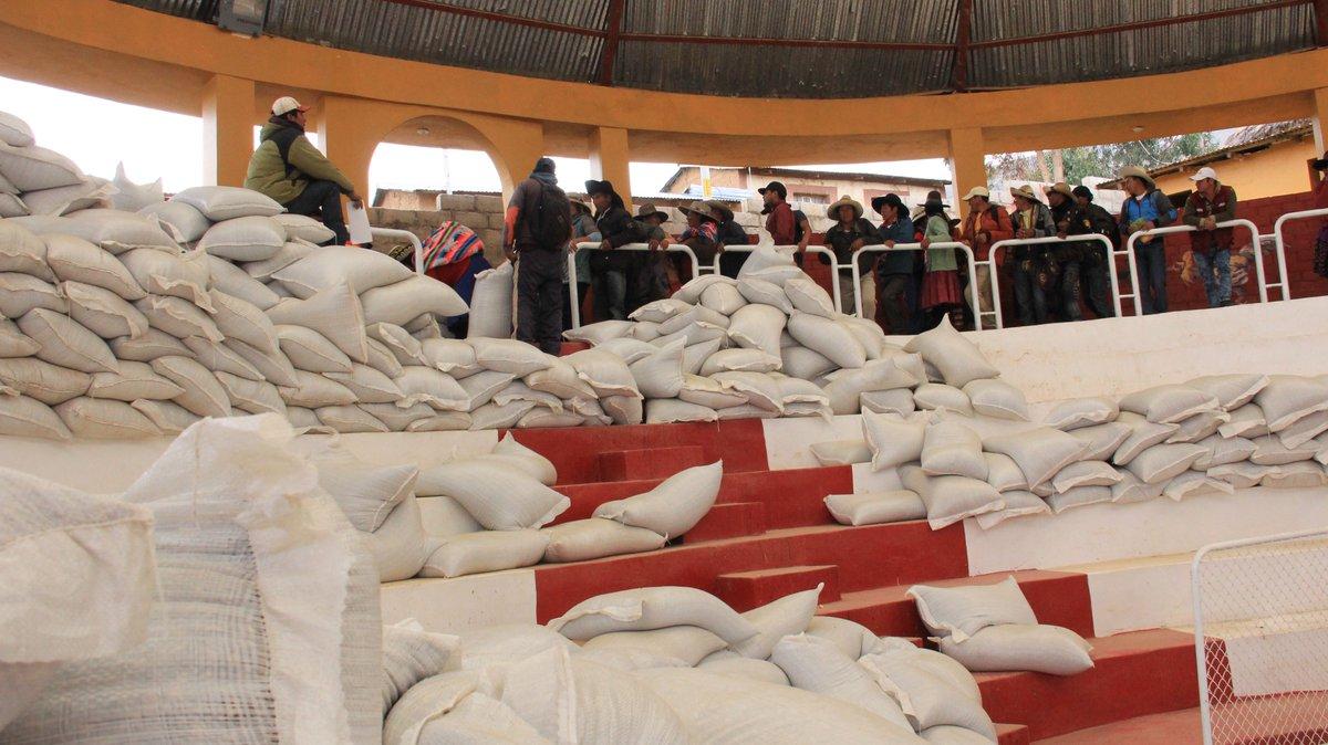 Pobladores de Chamaca recibieron 55 mil kilos de semillas de avena forrajera