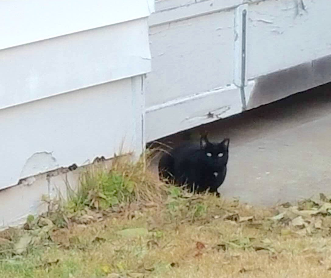 Update - she lost her home but today Annie has a new #feral colony & she is safe!