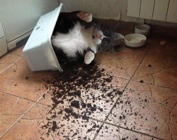 @Maxiedome WHO KNOCKED OVER MY CAT