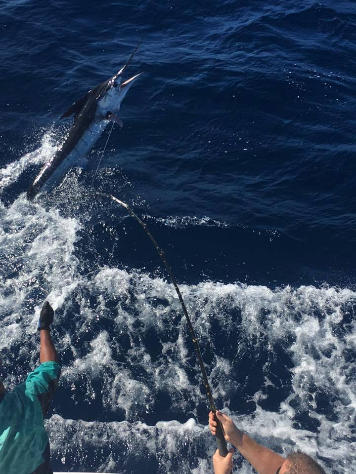 Cabo, MX - Caliente went 2-2 on Striped Marlin.
