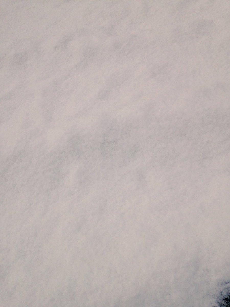 雪が!!!!積もった!!!!