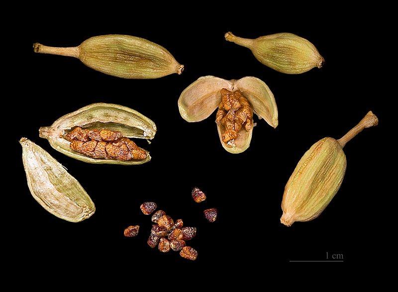 الهيل  cardamomum طريقة زراعتة تفتح حبة الهيل وتضع البذور التي داخلها فالماء لمدة ٢٤ ساعة ثم تزرع ، تبدأ في النمو بعد ٣ أشهر