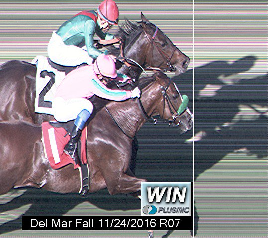 Now that's a #PhotoFinish https://t.co/RxDJA3Si3n