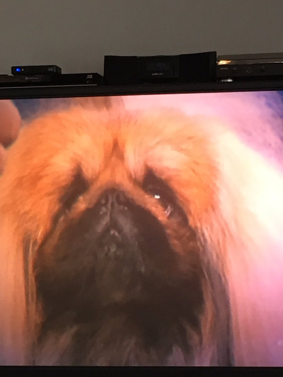 The internet thinks this Pekingese was robbed at the National Dog Show
