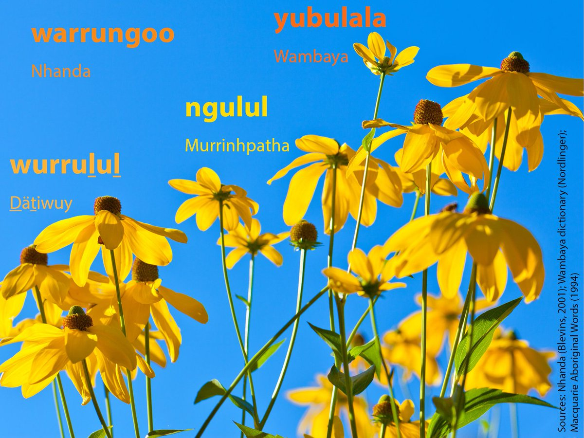 Ruil unimelb on twitter happy new year we hope your year is as we hope your year is as joyous as these beautiful flowers here is the name for flower in four indigenous languages httpstxrfqoqmdqv izmirmasajfo