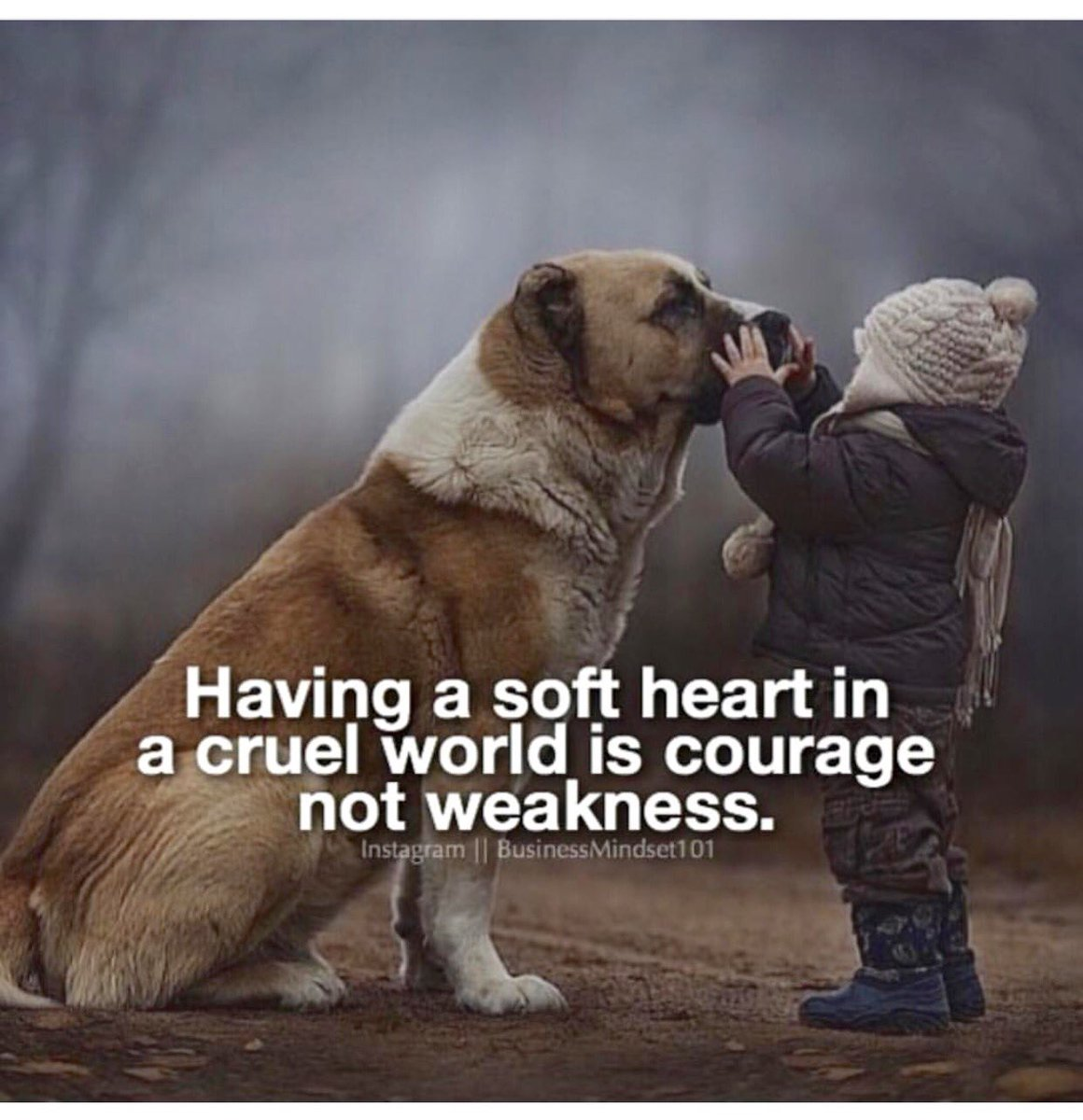 Inspirational Quotes On Twitter Having A Soft Heart In A Cruel