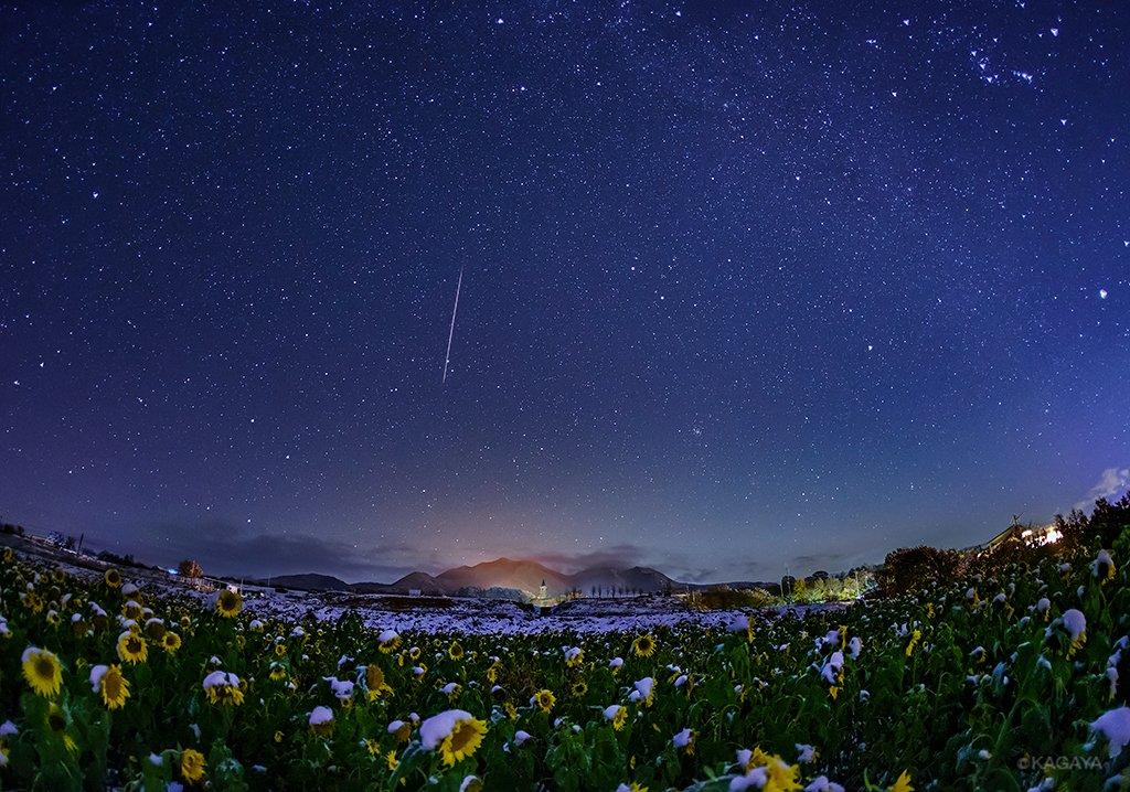 星、雪、ひまわり。⭐️❄️🌻11月に咲いた不思議なひまわりたち。そこにまさかの雪。夜になると晴れて満天の星に包まれました。夢中でシャッターを切っていると、さらに流れ星が飛び込みました。初めて見る幻想的な光景。(昨夜、山梨県北杜市にて撮影) pic.twitter.com/7EZ3pbyU1d