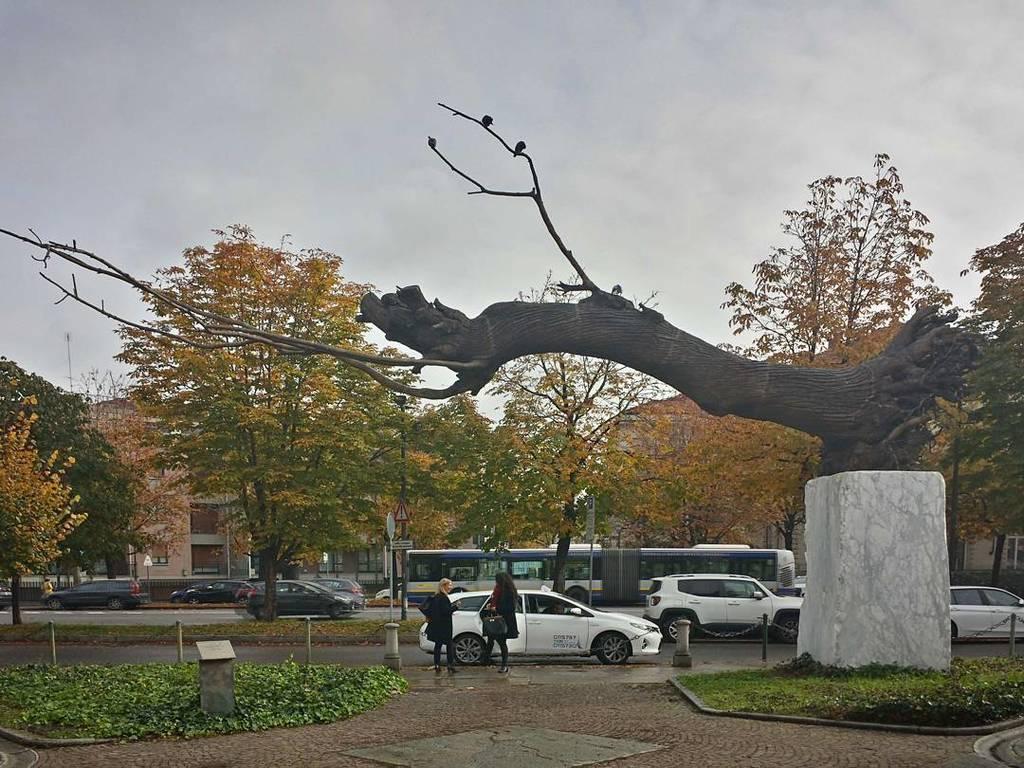 #giuseppepenone #gamtorino #torino #sculpture #bronze https://t.co/lHop5nXUtn